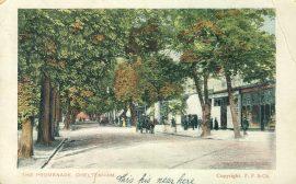 1905 The Promenade Cheltenham BEDORD postmark Vintage Postcard refP1 Please see BOTH large photos and description for details.