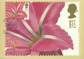 AMARYLLIS BRESILIENSIS Painting by PJ Redoute Postcard GARDENING DIRECT Chelmsford special hand stamp postmark 1997 refE206 Special Hand Stamped Royal Mail Postcard in Very Good Condition - address label on reverse.