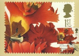 La Perroquet rouge Tulipa Painting by GD Ehret Postcard special BLLOOMS Bressingham hand stamp postmark 1997 refE208 Special Hand Stamped Royal Mail Postcard in Very Good Condition - address label on reverse.