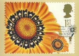 GAZANIA SPLENDENS painting by Mis CC Sowerby Postcard special Dorney Windsor BLOOMS Bressingham hand stamp postmark 1997 refE211 Special Hand Stamped Royal Mail Postcard in Very Good Condition - address label on reverse.