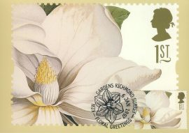 MAGNOLIA ALTISSIMA painting by GD Ehret Postcard special FLORAL GREETING KEW hand stamp postmark 1997 refE213 Special Hand Stamped Royal Mail Postcard in Very Good Condition - address label on reverse.