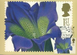 GENTIANA ACAULIS painting by GD Ehret Postcard BLLOOMS Bressingham 1997 special hand stamp postmark refE214 Special Hand Stamped Royal Mail Postcard in Very Good Condition - address label on reverse.