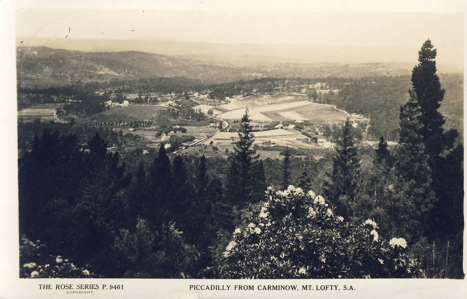 1950s Piccadilly from Carminow Mt. Lofty South Australia Old Postcard refP9 Rose Series P.6461 Pre-owned used condition with name address and message on reverse with stamp.