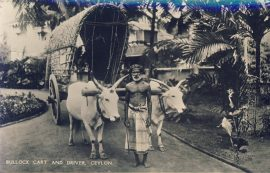 CEYLON Bullock Cart & Driver Old 1950 Postcard PERTH postmark refP9 Pre-owned used condition with name address and message on reverse with Australia 2 1/2 d stamp. Father Christmas postmark